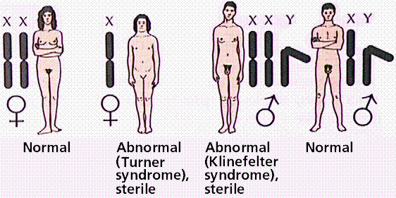 Topic definition of sex chromosome